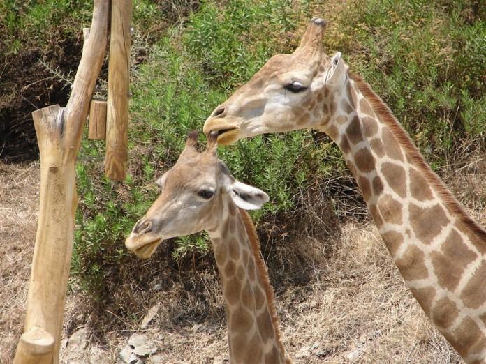 Selwo Safari Park